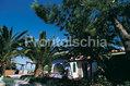 Hotel Carlo Magno - Il giardino