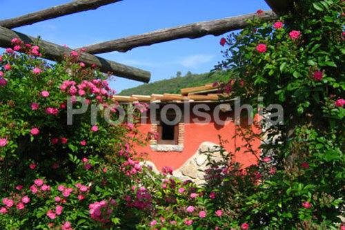 Foto dell'Agriturismo Pera di Basso